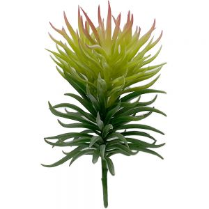 af102 : Light green spiky succulent