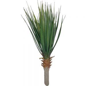 af129 : Large Yucca Succulent plant