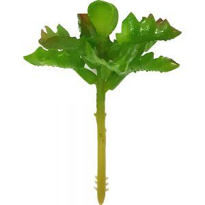 af145 : Key Lime succulent