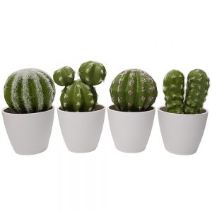 Thorny Barrell catcus plant - potted (mix of 4 designs)