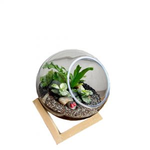 MV037-S : Dali Glass Ball atrium with wooden cubic stand - S (D15cm)